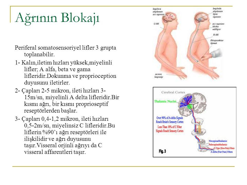 Spinal korda hissi giriş iki ayrı tip sinir lifi ile taşınır.Bunlar geniş miyelinli ve kısa miyelinsiz liflerdir.Bu sinirlerden uyarılar 3 spinal kord sistemine aktarılırlar.