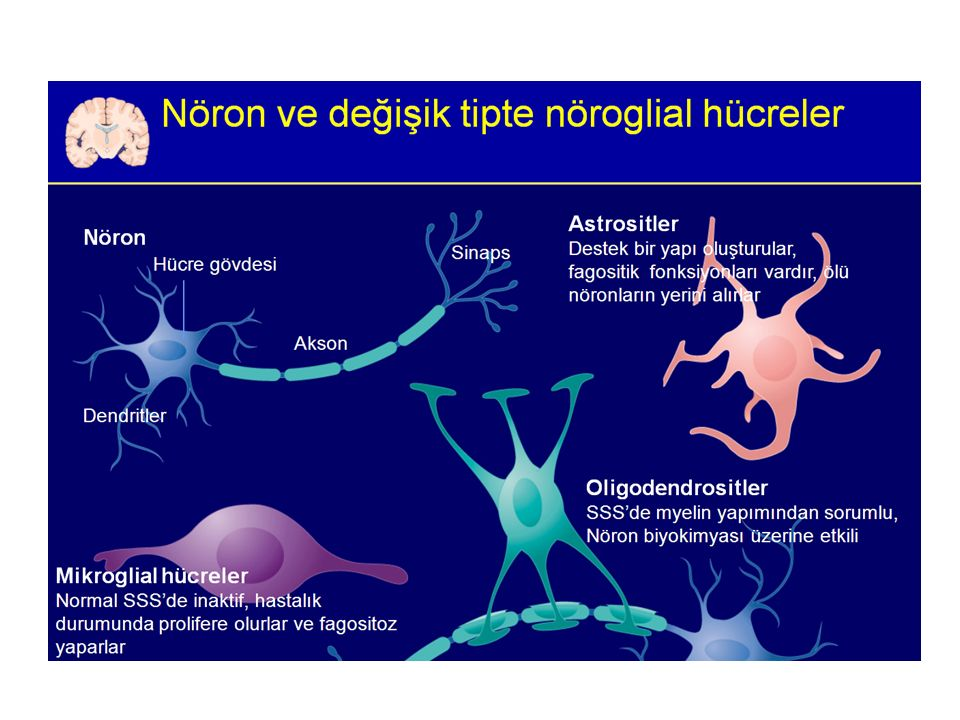 ETYOLOJİ Otoimmün – Myeline karşı T-hücrelerinin aktivasyonu Viral – Spesifik viral protein gösterilmemiş – Şüpheli moleküler benzerlik – HHV6 ile ilişkili demyelinizasyon – Viral infeksiyonlar atakları provoke edebilir