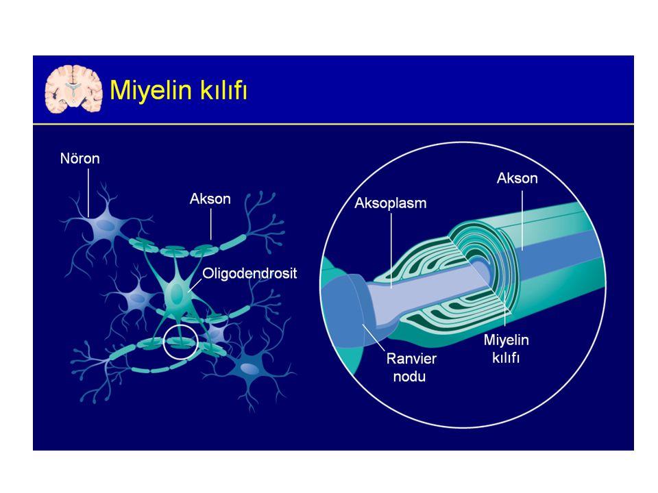 MRI MRI anormalliği: – Kesin MS'de %90 – Olası MS'de % 70