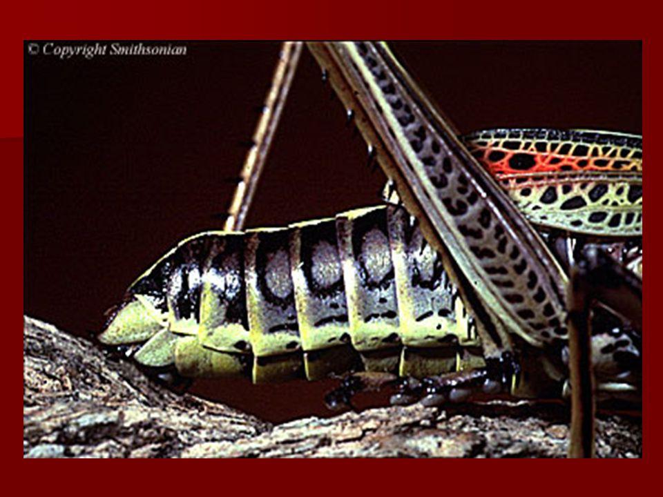 BESLENME Genel olarak böcekler besinlerini ısırıp çiğnemek veya emmek suretiyle alırlar.