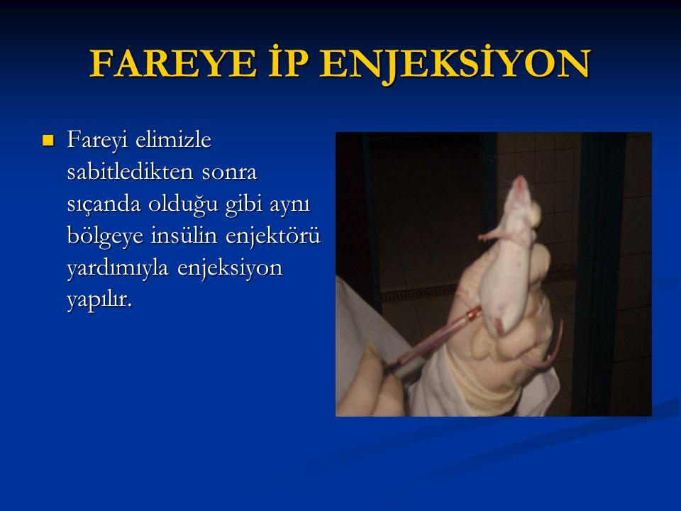FAREYE İP ENJEKSİYON Fareyi elimizle sabitledikten sonra sıçanda olduğu gibi aynı bölgeye insülin enjektörü yardımıyla enjeksiyon yapılır. Fareyi elim