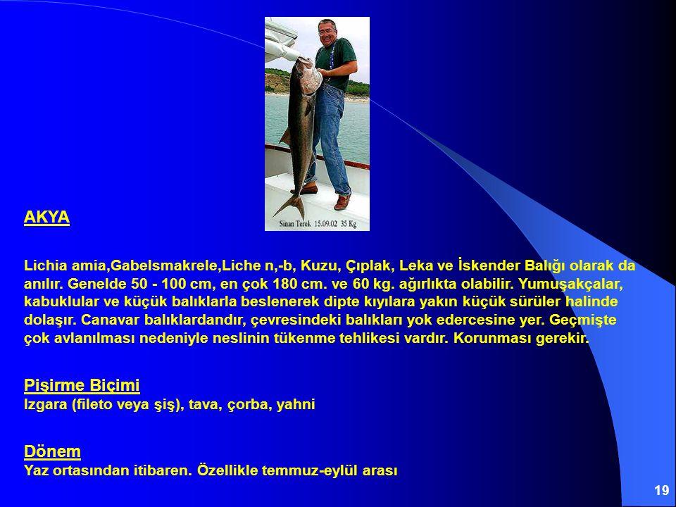 19 AKYA Lichia amia,Gabelsmakrele,Liche n'-b' Kuzu, Çıplak, Leka ve İskender Balığı olarak da anılır. Genelde 50 - 100 cm, en çok 180 cm. ve 60 kg. ağ