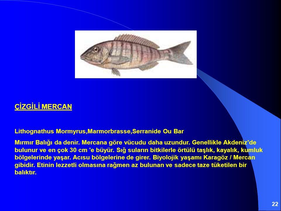 22 ÇİZGİLİ MERCAN Lithognathus Mormyrus,Marmorbrasse,Serranide Ou Bar Mırmır Balığı da denir. Mercana göre vücudu daha uzundur. Genellikle Akdeniz'de