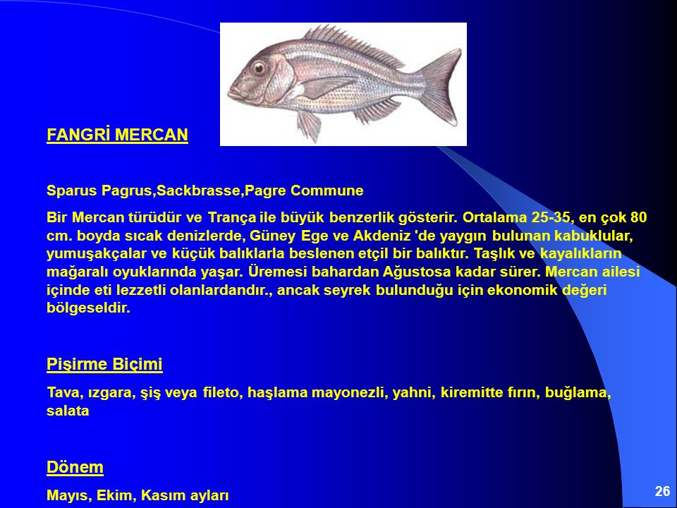 26 FANGRİ MERCAN Sparus Pagrus,Sackbrasse,Pagre Commune Bir Mercan türüdür ve Trança ile büyük benzerlik gösterir. Ortalama 25-35, en çok 80 cm. boyda