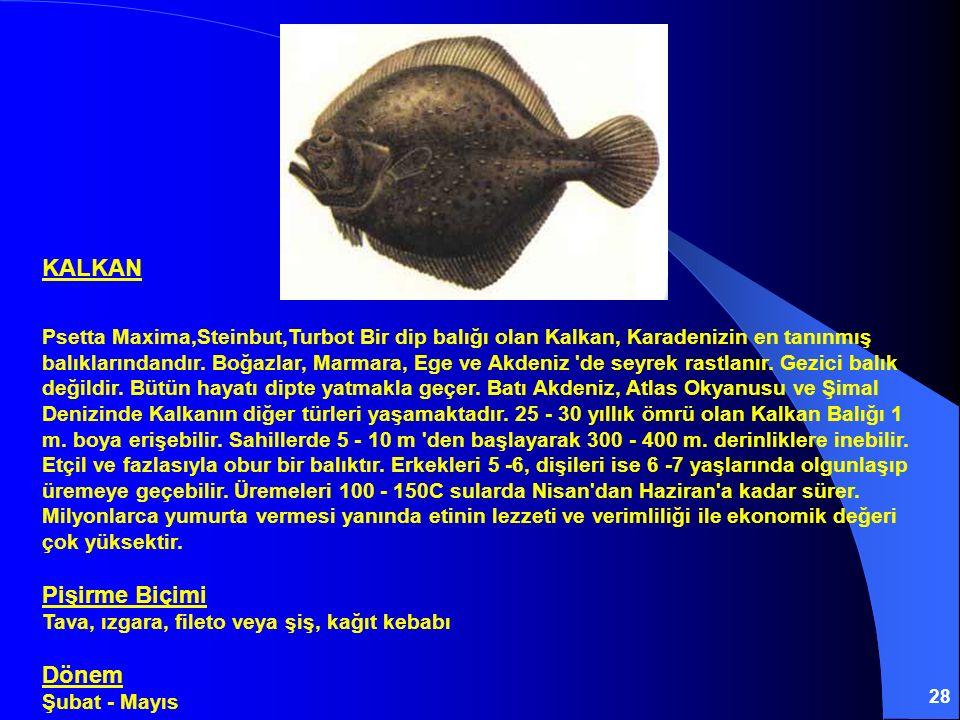 28 KALKAN Psetta Maxima,Steinbut,Turbot Bir dip balığı olan Kalkan, Karadenizin en tanınmış balıklarındandır. Boğazlar, Marmara, Ege ve Akdeniz 'de se