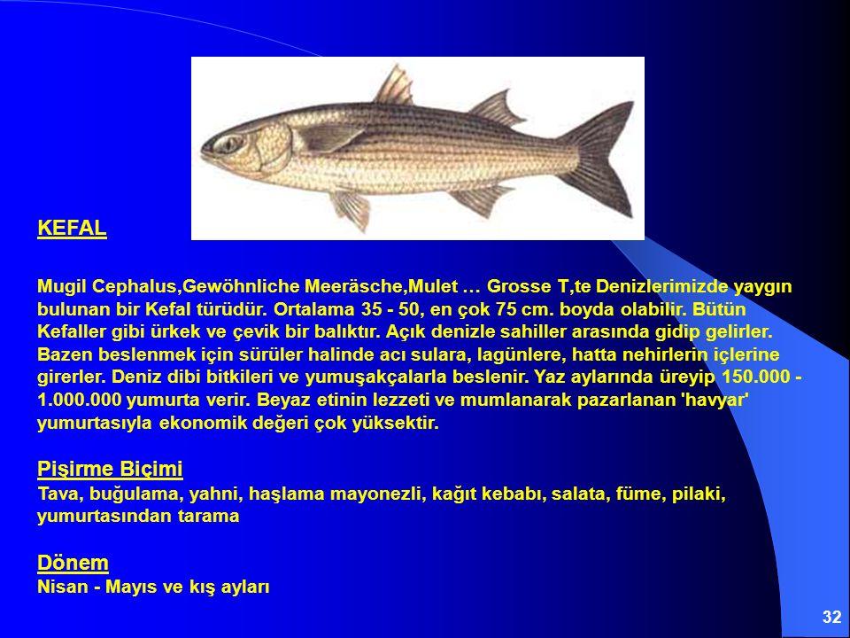 32 KEFAL Mugil Cephalus,Gewöhnliche Meeräsche,Mulet … Grosse T'te Denizlerimizde yaygın bulunan bir Kefal türüdür. Ortalama 35 - 50, en çok 75 cm. boy