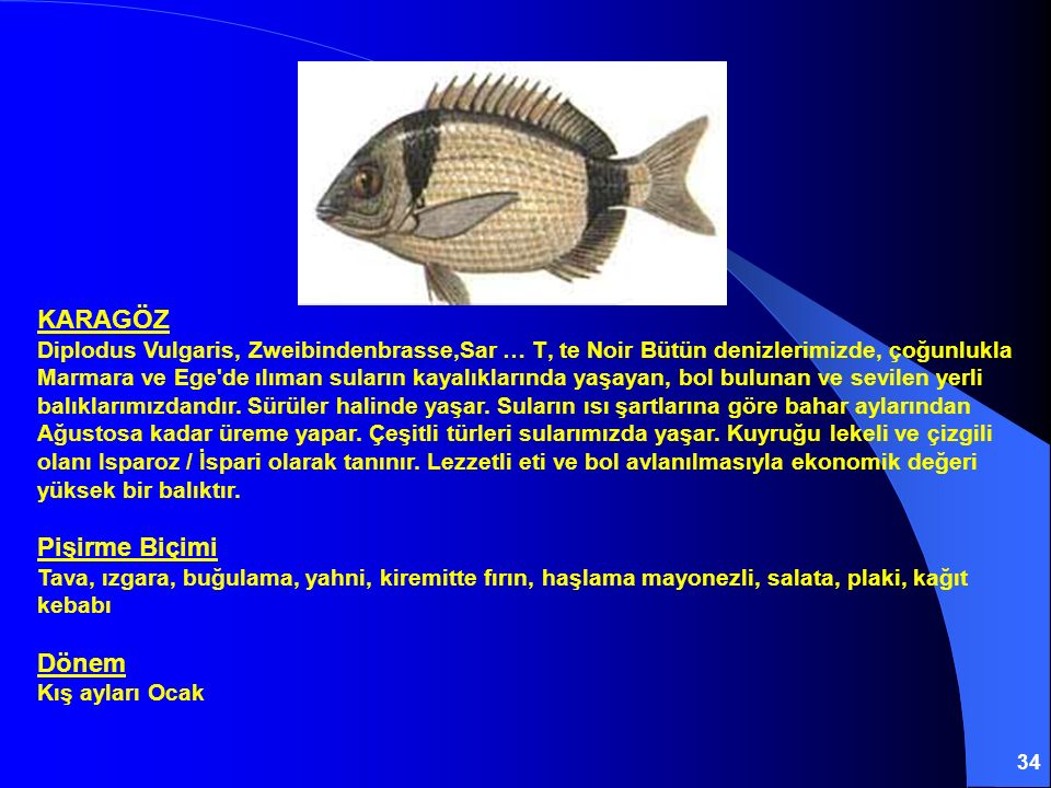 34 KARAGÖZ Diplodus Vulgaris, Zweibindenbrasse,Sar … T' te Noir Bütün denizlerimizde, çoğunlukla Marmara ve Ege'de ılıman suların kayalıklarında yaşay