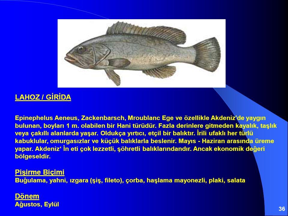 36 LAHOZ / GİRİDA Epinephelus Aeneus, Zackenbarsch, Mroublanc Ege ve özellikle Akdeniz'de yaygın bulunan, boyları 1 m. olabilen bir Hani türüdür. Fazl
