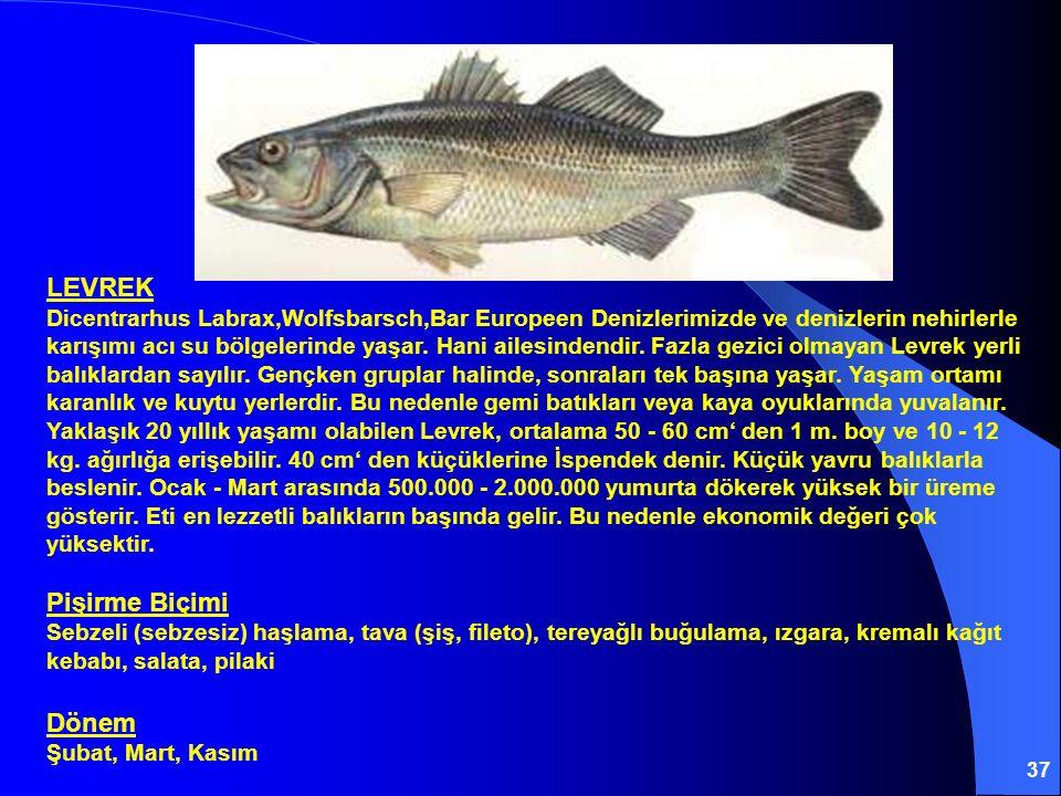 37 LEVREK Dicentrarhus Labrax,Wolfsbarsch,Bar Europeen Denizlerimizde ve denizlerin nehirlerle karışımı acı su bölgelerinde yaşar. Hani ailesindendir.