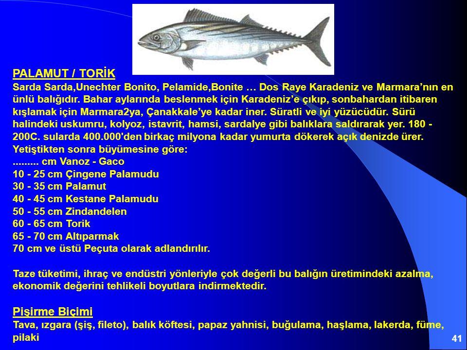 41 PALAMUT / TORİK Sarda Sarda,Unechter Bonito, Pelamide,Bonite … Dos Raye Karadeniz ve Marmara'nın en ünlü balığıdır. Bahar aylarında beslenmek için