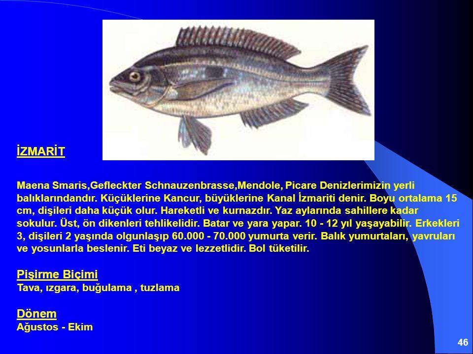 46 İZMARİT Maena Smaris,Gefleckter Schnauzenbrasse,Mendole, Picare Denizlerimizin yerli balıklarındandır. Küçüklerine Kancur, büyüklerine Kanal İzmari
