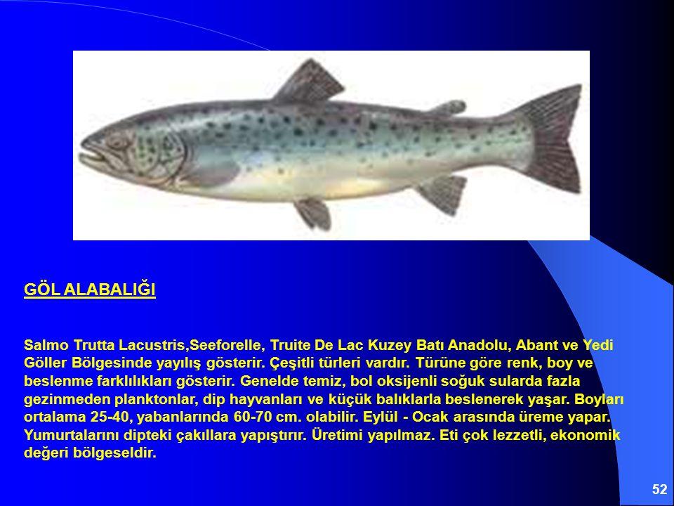 52 GÖL ALABALIĞI Salmo Trutta Lacustris,Seeforelle, Truite De Lac Kuzey Batı Anadolu, Abant ve Yedi Göller Bölgesinde yayılış gösterir. Çeşitli türler