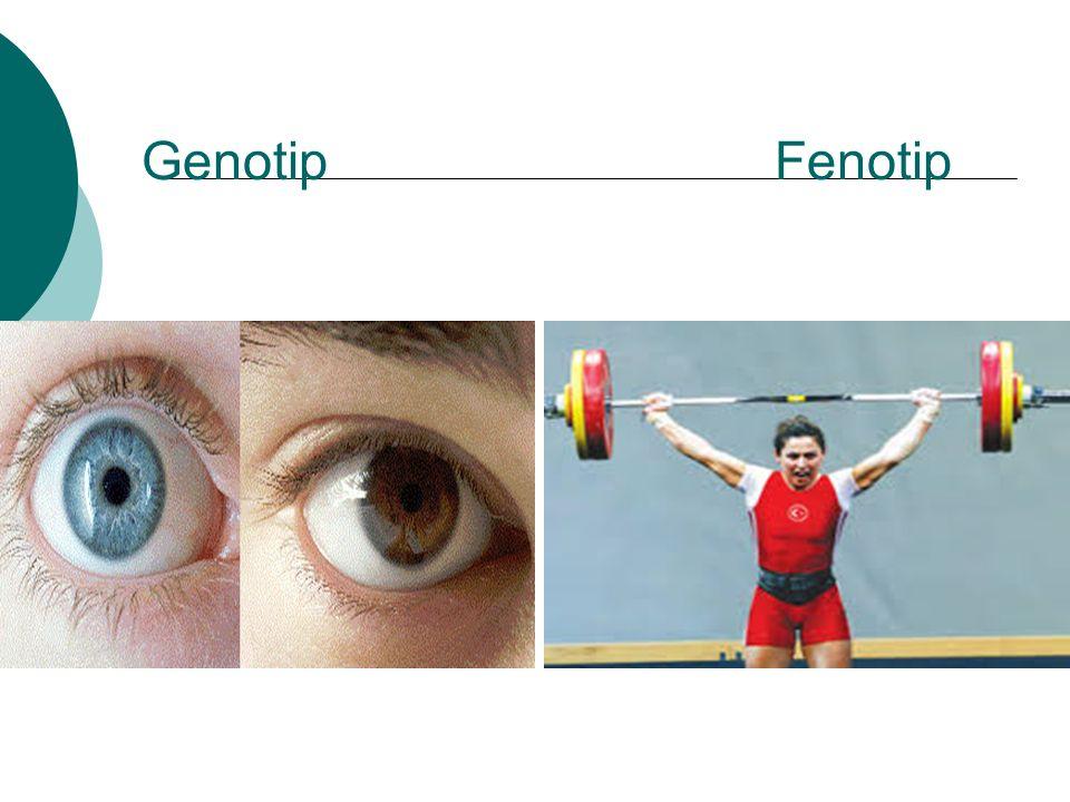 Genotip Fenotip