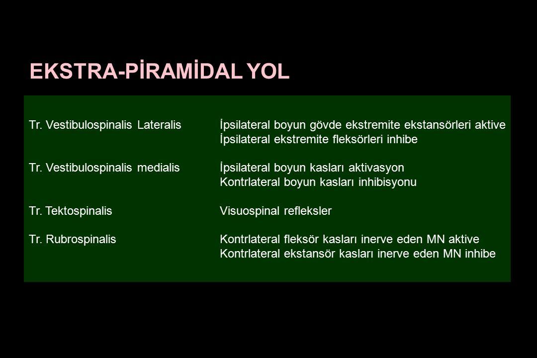 Tr. Vestibulospinalis Lateralis İpsilateral boyun gövde ekstremite ekstansörleri aktive İpsilateral ekstremite fleksörleri inhibe Tr. Vestibulospinali