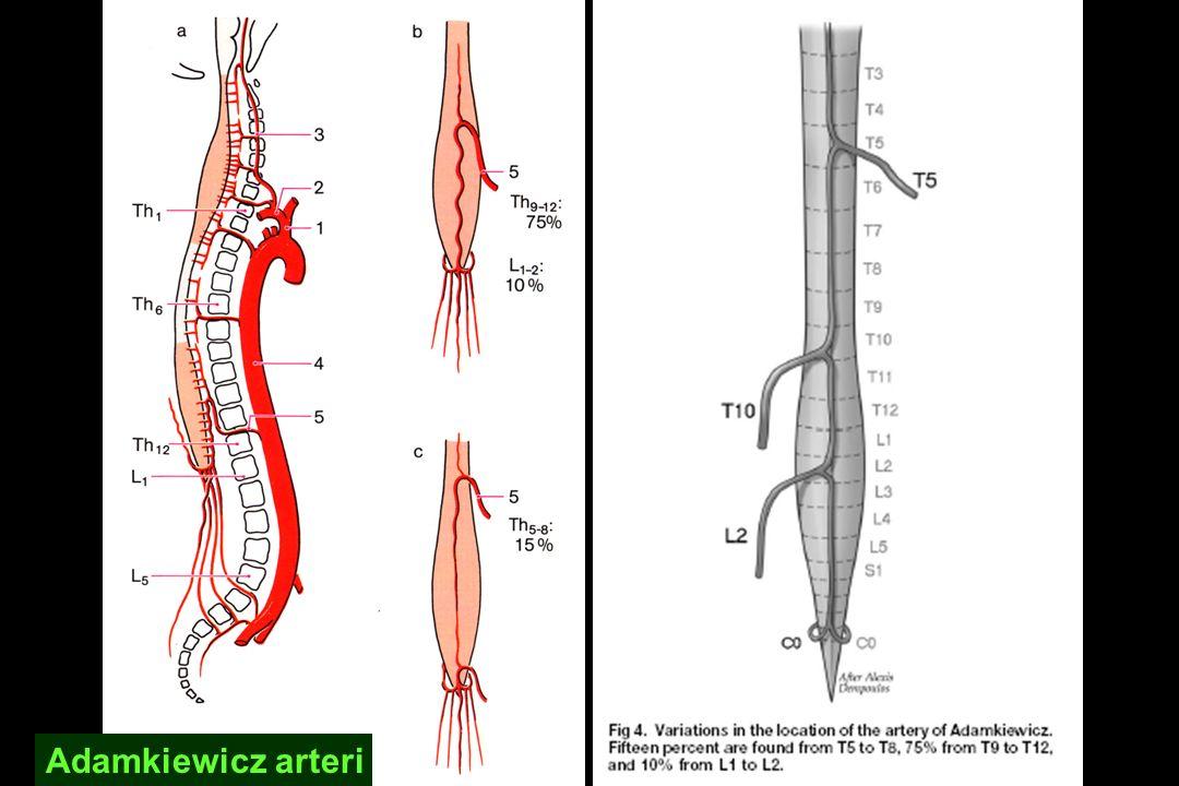 Adamkiewicz arteri