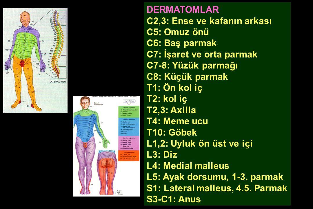 Sifilize bağlı funikulus posterior ve arka spinal kök tutulumu TABES DORSALİS Klinik: Ayırd edici dokunma hissi Bilinçli propriosepsiyon Vibrasyon ve pozisyon hissi kayıp Posterior kolon ataksisi, Romberg (+) Batıcı şiddetli ağrı DTR , flask İnkontinans Kuvvetsizlik yoktur*.