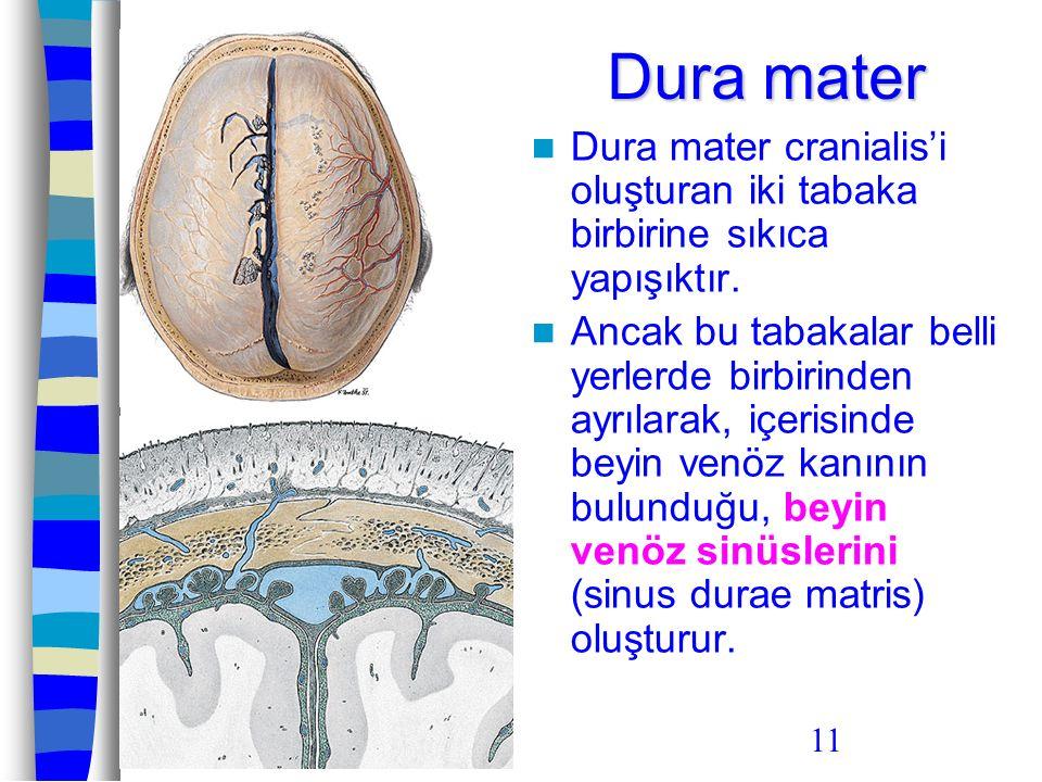 11 Dura mater Dura mater cranialis'i oluşturan iki tabaka birbirine sıkıca yapışıktır. Ancak bu tabakalar belli yerlerde birbirinden ayrılarak, içeris