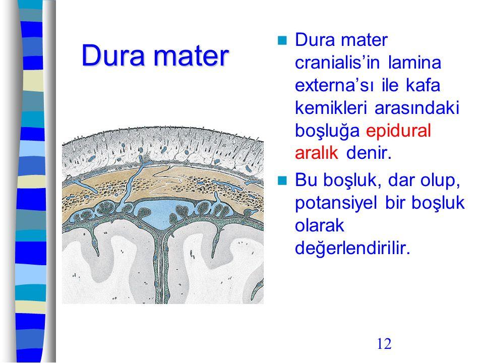 12 Dura mater Dura mater cranialis'in lamina externa'sı ile kafa kemikleri arasındaki boşluğa epidural aralık denir. Bu boşluk, dar olup, potansiyel b