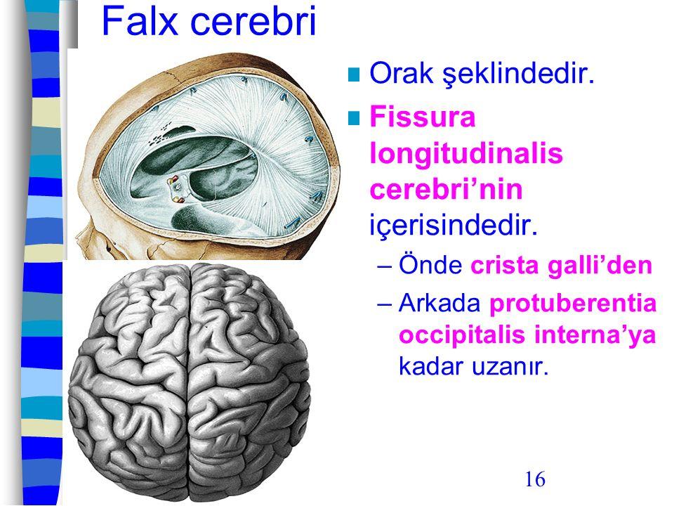 16 Falx cerebri Orak şeklindedir. Fissura longitudinalis cerebri'nin içerisindedir. –Önde crista galli'den –Arkada protuberentia occipitalis interna'y