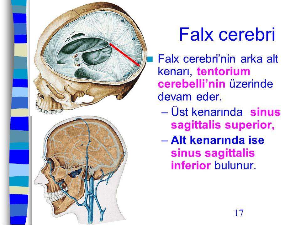 17 Falx cerebri Falx cerebri'nin arka alt kenarı, tentorium cerebelli'nin üzerinde devam eder. –Üst kenarında sinus sagittalis superior, –Alt kenarınd