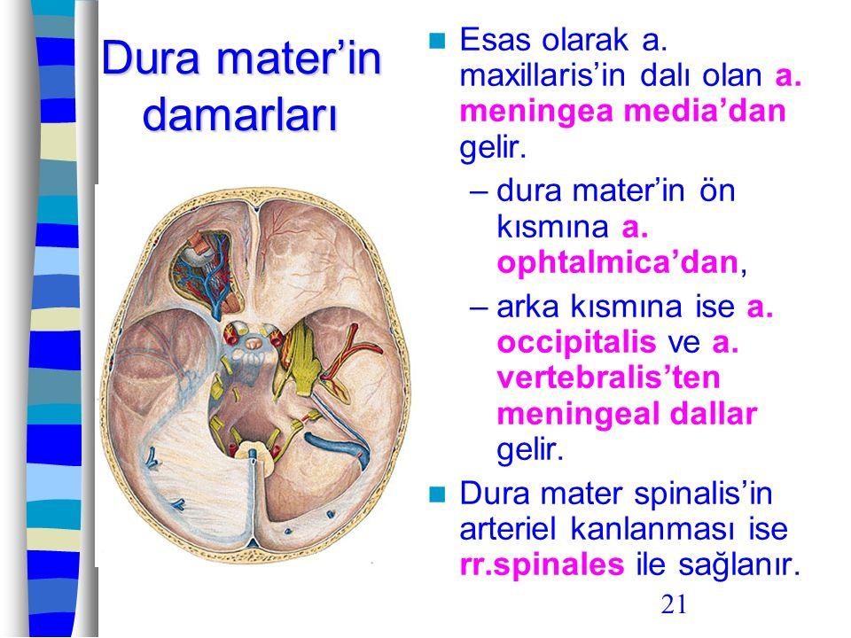 21 Dura mater'in damarları Esas olarak a. maxillaris'in dalı olan a. meningea media'dan gelir. –dura mater'in ön kısmına a. ophtalmica'dan, –arka kısm