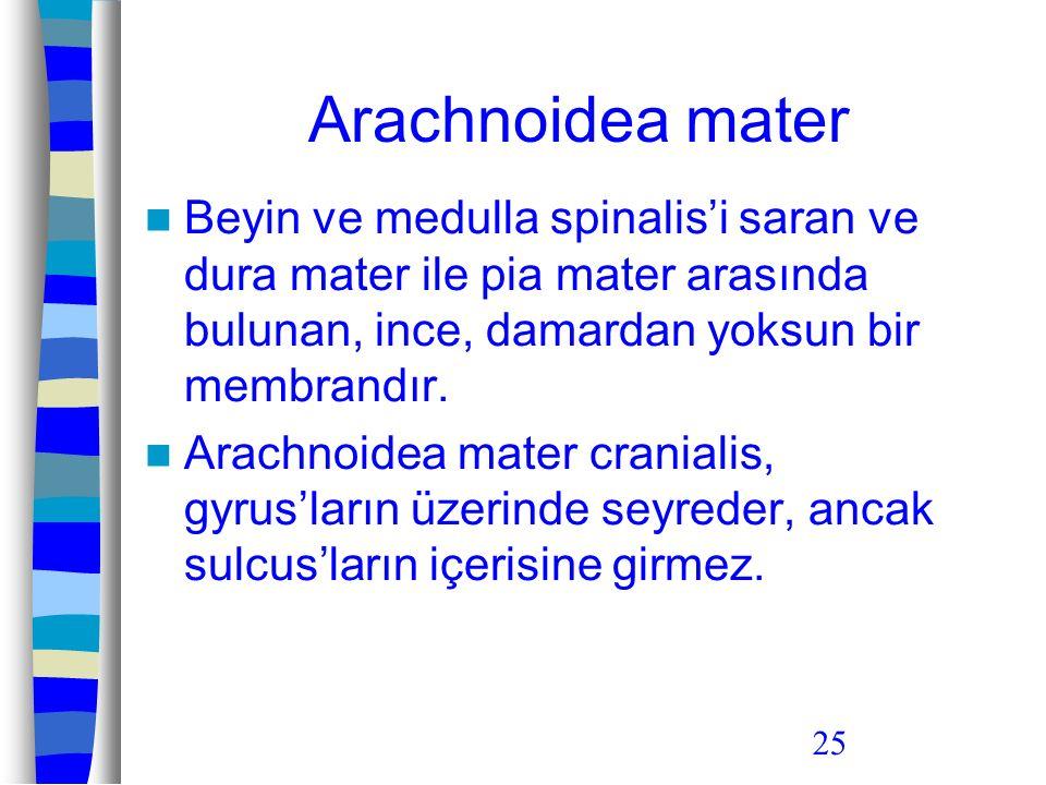 25 Arachnoidea mater Beyin ve medulla spinalis'i saran ve dura mater ile pia mater arasında bulunan, ince, damardan yoksun bir membrandır. Arachnoidea