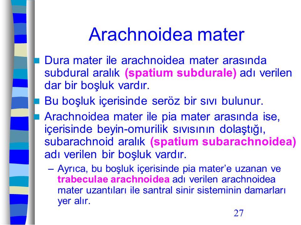27 Arachnoidea mater Dura mater ile arachnoidea mater arasında subdural aralık (spatium subdurale) adı verilen dar bir boşluk vardır. Bu boşluk içeris
