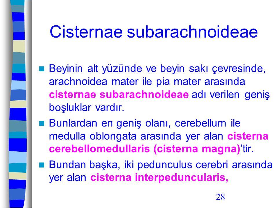 28 Cisternae subarachnoideae Beyinin alt yüzünde ve beyin sakı çevresinde, arachnoidea mater ile pia mater arasında cisternae subarachnoideae adı veri