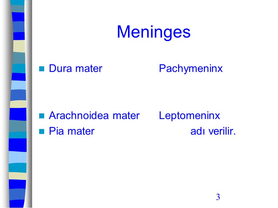 4 Meninx Dura mater; –damar ve sinirden zengin bir yapıya sahipken, Arachnoidea mater ve pia mater; –damardan yoksun olup, az miktarda miyelinsiz sinir lifleri içerir.