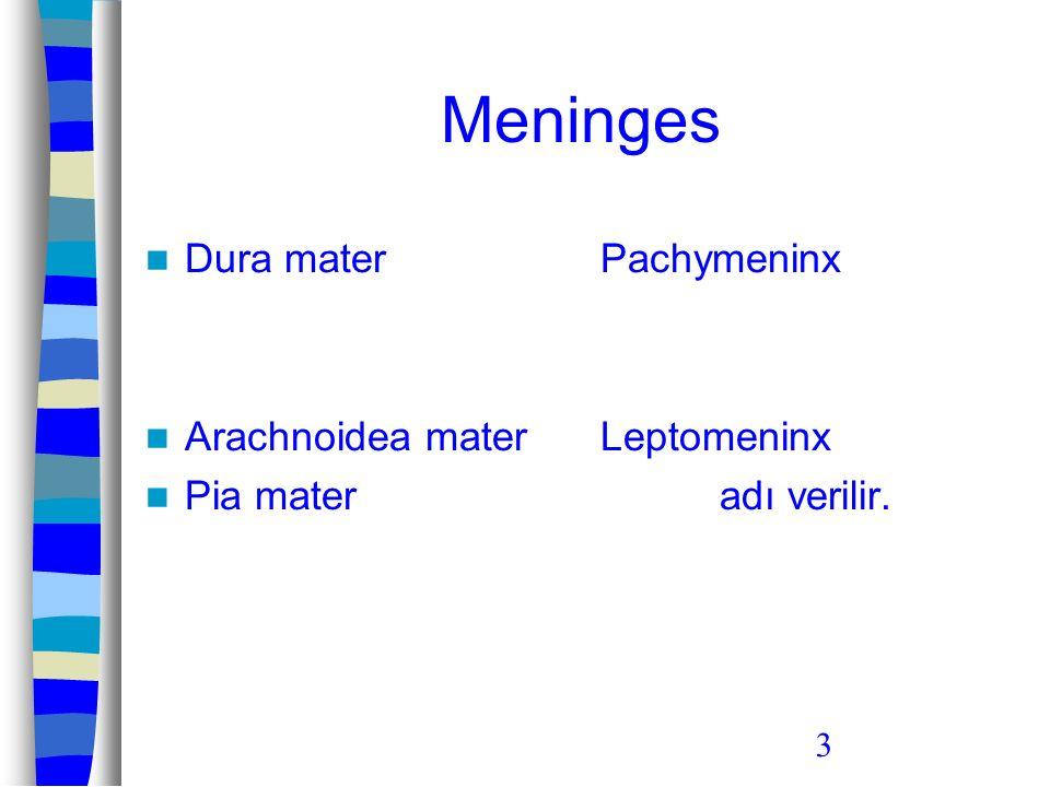 3 Meninges Dura mater Arachnoidea mater Pia mater Pachymeninx Leptomeninx adı verilir.