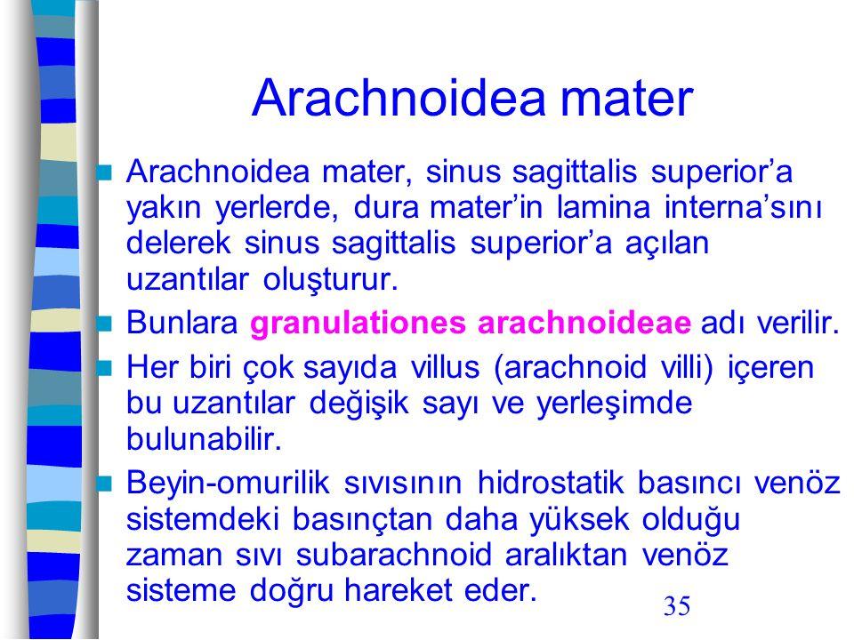 35 Arachnoidea mater Arachnoidea mater, sinus sagittalis superior'a yakın yerlerde, dura mater'in lamina interna'sını delerek sinus sagittalis superio