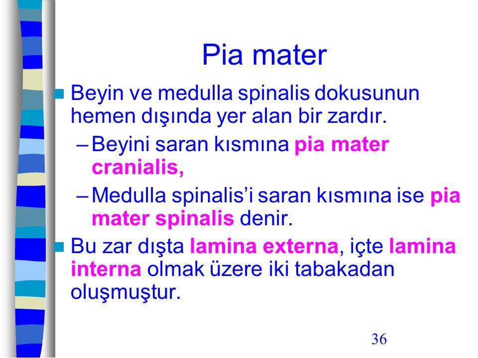 36 Pia mater Beyin ve medulla spinalis dokusunun hemen dışında yer alan bir zardır. –Beyini saran kısmına pia mater cranialis, –Medulla spinalis'i sar