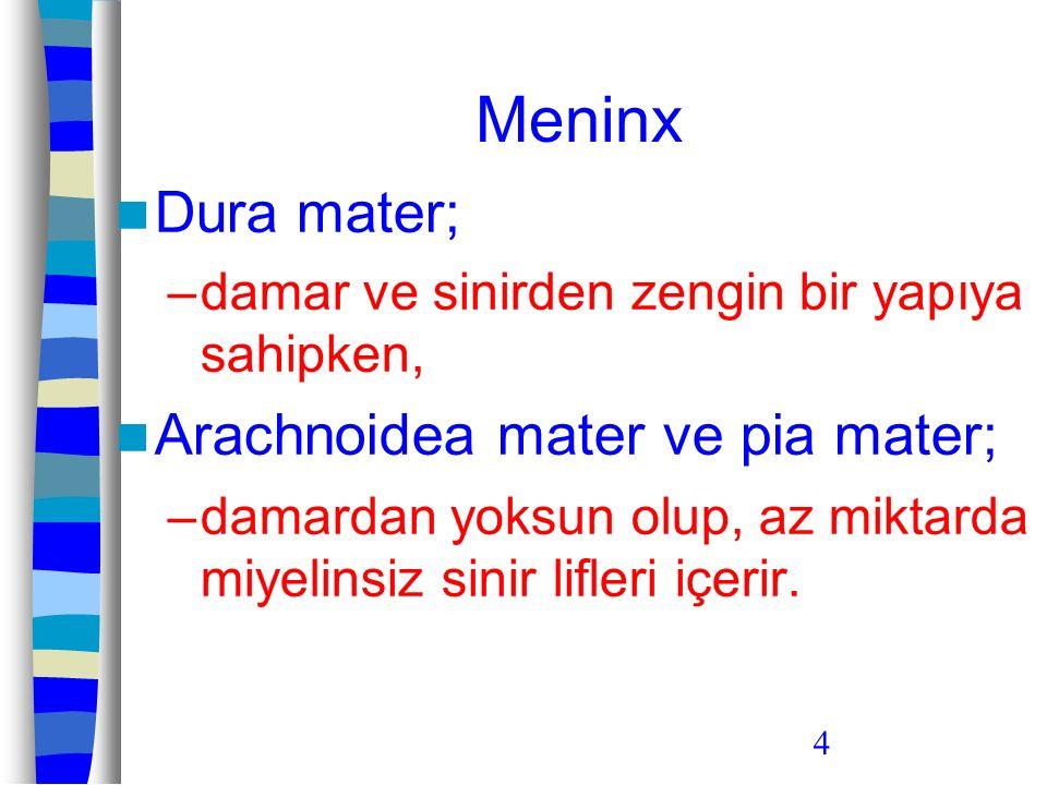 4 Meninx Dura mater; –damar ve sinirden zengin bir yapıya sahipken, Arachnoidea mater ve pia mater; –damardan yoksun olup, az miktarda miyelinsiz sini