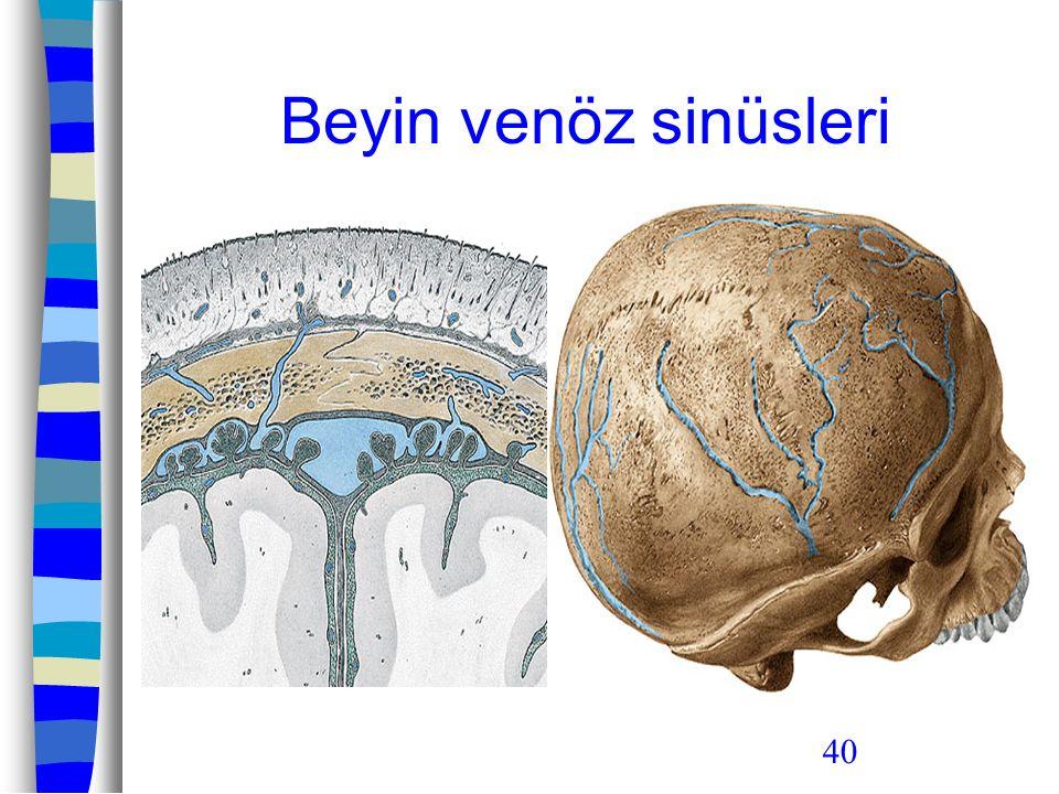 40 Beyin venöz sinüsleri
