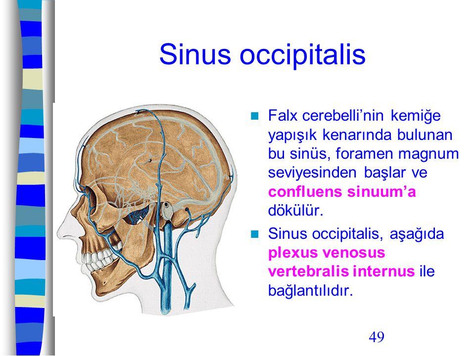 49 Sinus occipitalis Falx cerebelli'nin kemiğe yapışık kenarında bulunan bu sinüs, foramen magnum seviyesinden başlar ve confluens sinuum'a dökülür. S
