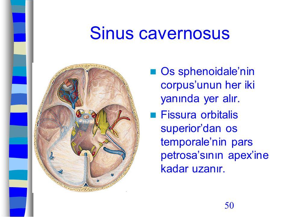 50 Sinus cavernosus Os sphenoidale'nin corpus'unun her iki yanında yer alır. Fissura orbitalis superior'dan os temporale'nin pars petrosa'sının apex'i