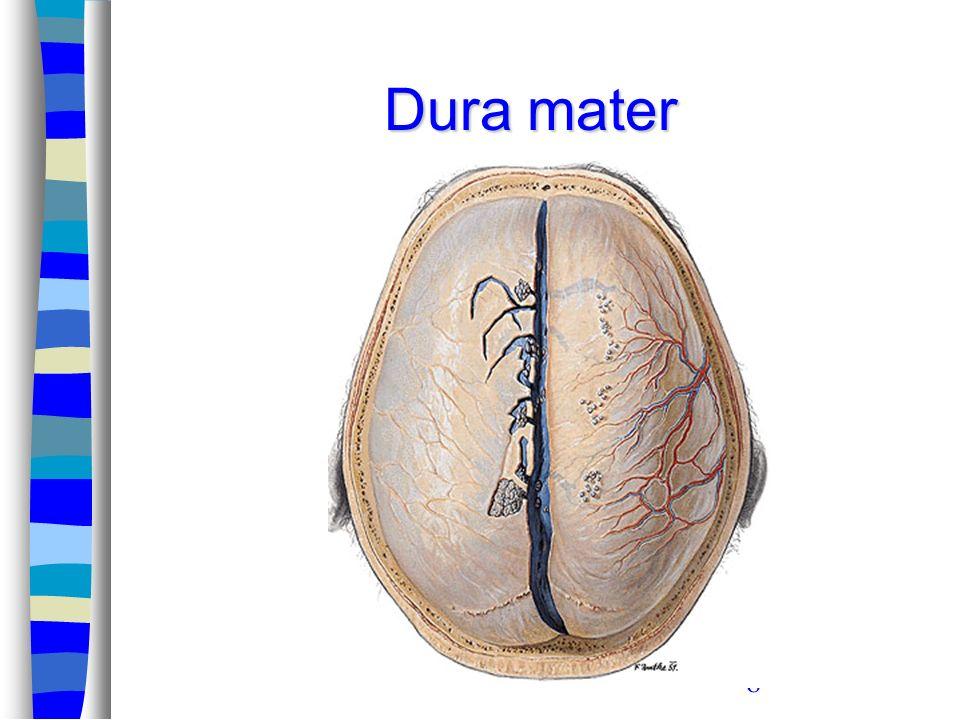 39 Beyin venöz sinüsleri –Cerebral venler aracılığı ile beyinden gelen venöz kan ve –Granulationes arachnoidea aracılığı ile subarachnoid aralıktan gelen BOS, bu venöz sinüsler aracılığı ile drene olur.