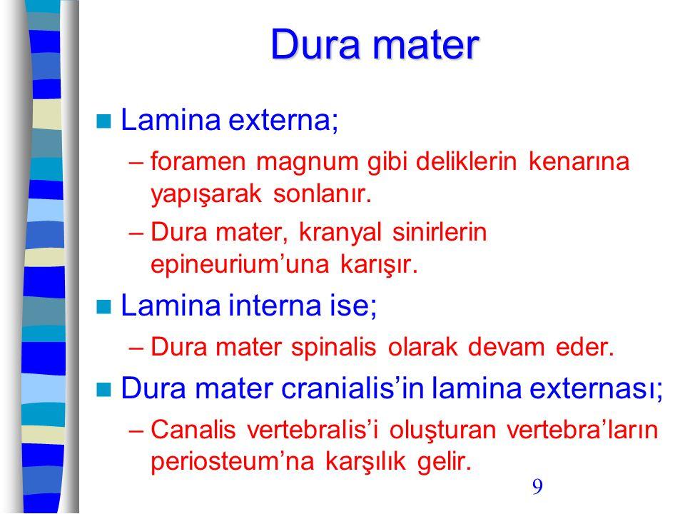 9 Lamina externa; –foramen magnum gibi deliklerin kenarına yapışarak sonlanır. –Dura mater, kranyal sinirlerin epineurium'una karışır. Lamina interna