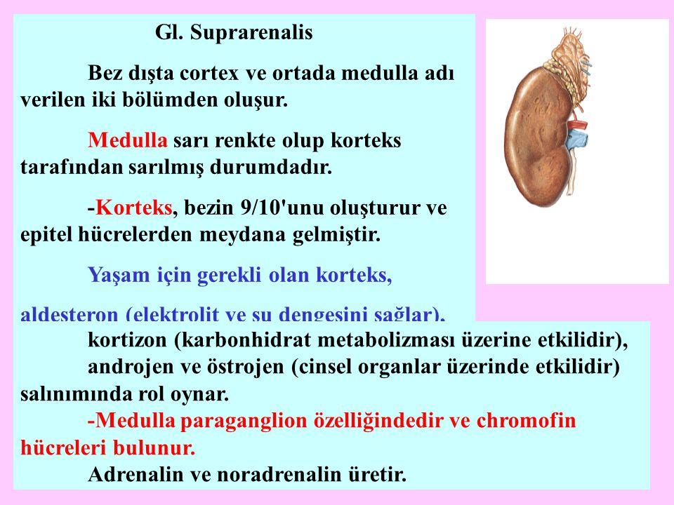 Gl. Suprarenalis Bez dışta cortex ve ortada medulla adı verilen iki bölümden oluşur. Medulla sarı renkte olup korteks tarafından sarılmış durumdadır.