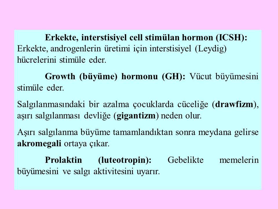 Erkekte, interstisiyel cell stimülan hormon (ICSH): Erkekte, androgenlerin üretimi için interstisiyel (Leydig) hücrelerini stimüle eder. Growth (büyüm
