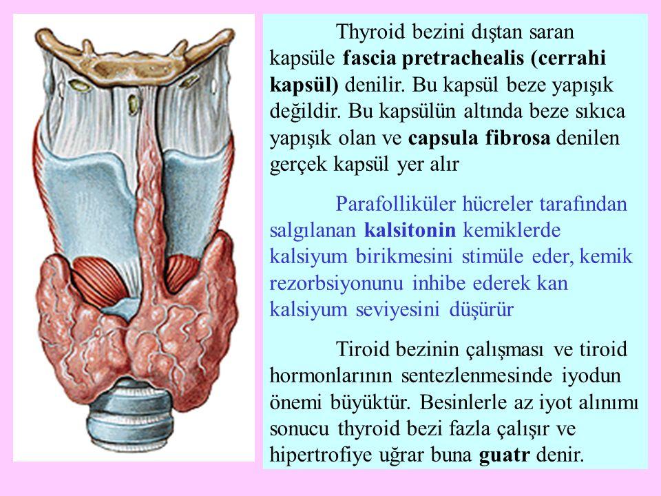 Thyroid bezini dıştan saran kapsüle fascia pretrachealis (cerrahi kapsül) denilir. Bu kapsül beze yapışık değildir. Bu kapsülün altında beze sıkıca ya