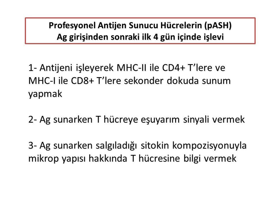 Profesyonel Antijen Sunucu Hücrelerin (pASH) Ag girişinden sonraki ilk 4 gün içinde işlevi 1- Antijeni işleyerek MHC-II ile CD4+ T'lere ve MHC-I ile CD8+ T'lere sekonder dokuda sunum yapmak 2- Ag sunarken T hücreye eşuyarım sinyali vermek 3- Ag sunarken salgıladığı sitokin kompozisyonuyla mikrop yapısı hakkında T hücresine bilgi vermek
