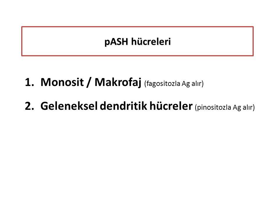 pASH hücreleri 1.Monosit / Makrofaj (fagositozla Ag alır) 2.Geleneksel dendritik hücreler (pinositozla Ag alır)