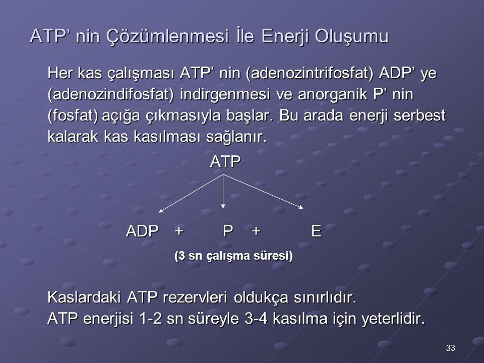33 ATP' nin Çözümlenmesi İle Enerji Oluşumu Her kas çalışması ATP' nin (adenozintrifosfat) ADP' ye (adenozindifosfat) indirgenmesi ve anorganik P' nin