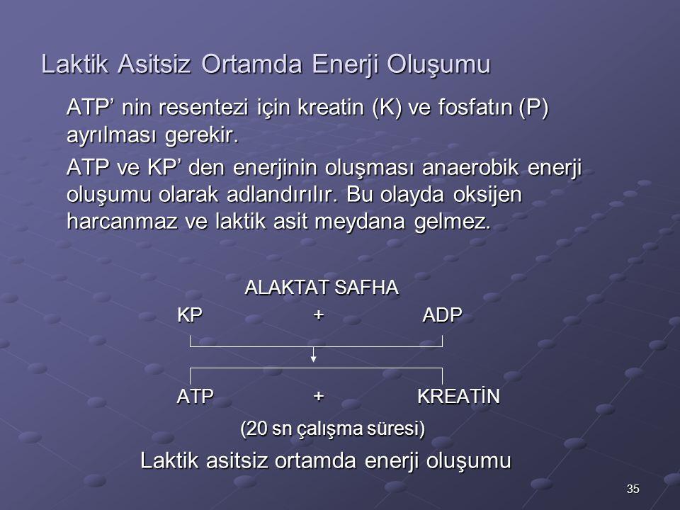 35 Laktik Asitsiz Ortamda Enerji Oluşumu ATP' nin resentezi için kreatin (K) ve fosfatın (P) ayrılması gerekir. ATP ve KP' den enerjinin oluşması anae