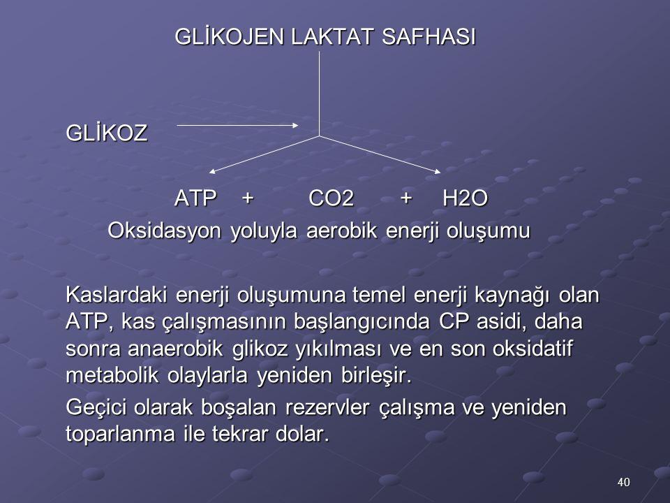 40 GLİKOJEN LAKTAT SAFHASI GLİKOZ ATP+CO2 +H2O Oksidasyon yoluyla aerobik enerji oluşumu Kaslardaki enerji oluşumuna temel enerji kaynağı olan ATP, kas çalışmasının başlangıcında CP asidi, daha sonra anaerobik glikoz yıkılması ve en son oksidatif metabolik olaylarla yeniden birleşir.