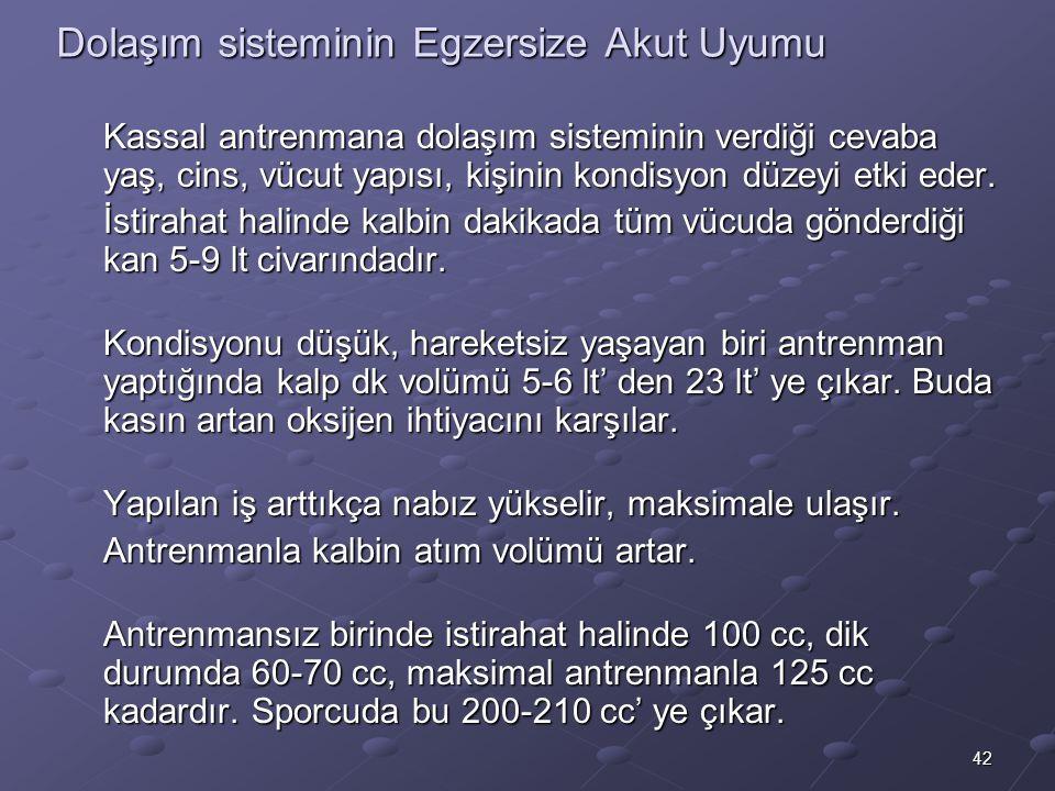 42 Dolaşım sisteminin Egzersize Akut Uyumu Kassal antrenmana dolaşım sisteminin verdiği cevaba yaş, cins, vücut yapısı, kişinin kondisyon düzeyi etki