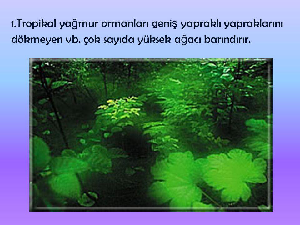 1.Tropikal ya ğ mur ormanları geni ş yapraklı yapraklarını dökmeyen vb.