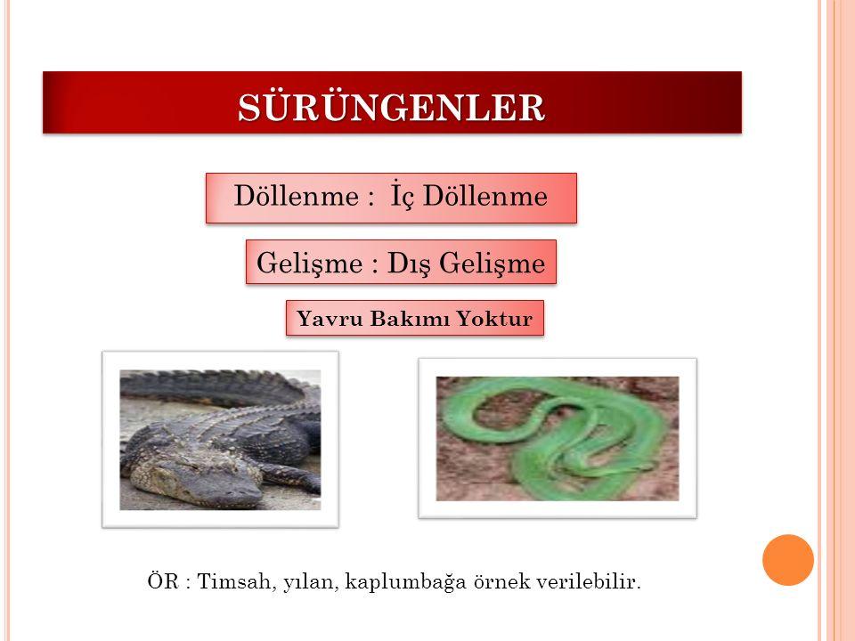 SÜRÜNGENLERSÜRÜNGENLER Döllenme : İç Döllenme Gelişme : Dış Gelişme ÖR : Timsah, yılan, kaplumbağa örnek verilebilir. Yavru Bakımı Yoktur