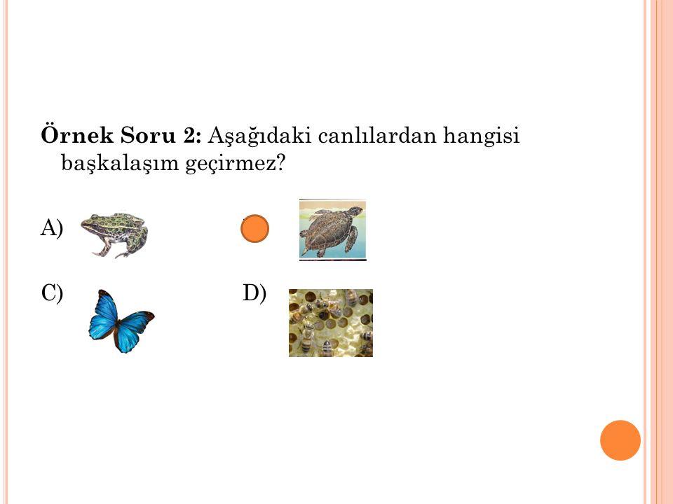 Örnek Soru 2: Aşağıdaki canlılardan hangisi başkalaşım geçirmez? A) B) C)D)